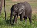 baby-elephant-full-of-mud