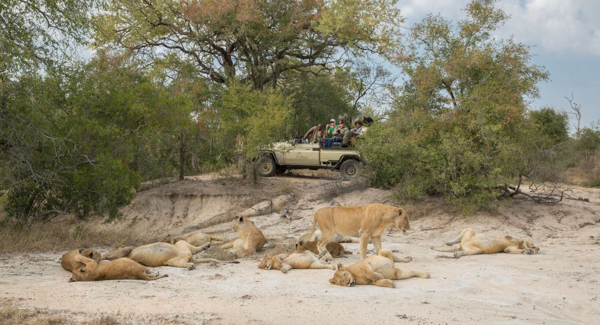 An Exceptional Private Safari
